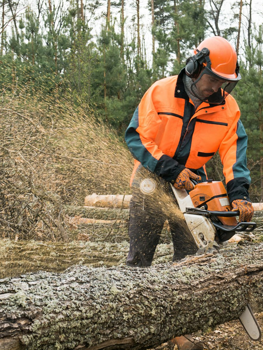 Man following chainsaw safety rules wearing orange hi-vis chainsaw PPE